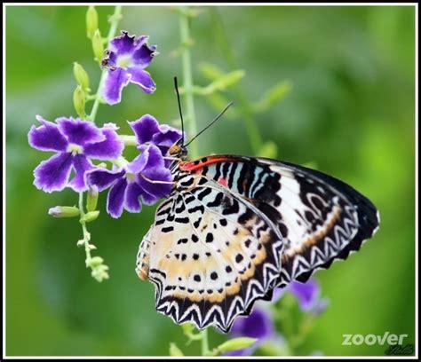 giardino delle farfalle vacanze attrazioni giardino delle farfalle foto hunawihr