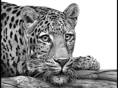 Big 5 Sketches by Wildlife Sketches By David Dancey Wood
