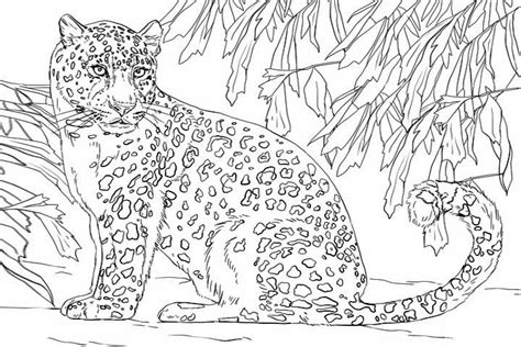 Snow Leopard Cubs Coloring Pages Leopard Coloring Page