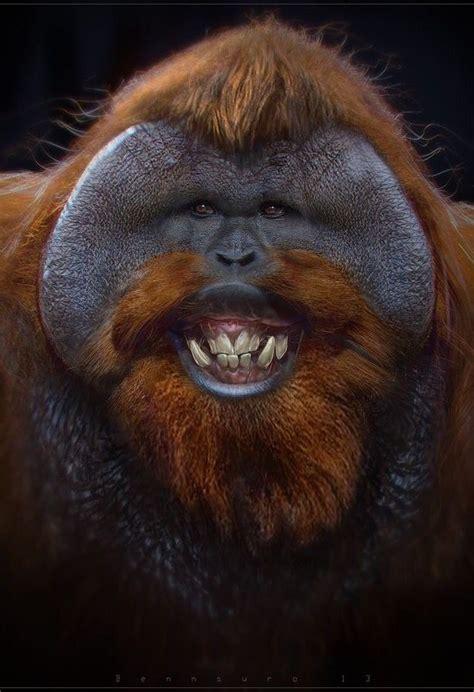 orangutans animaux