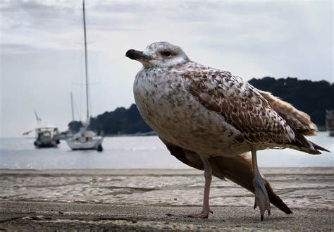 injured seagull by spns on deviantart