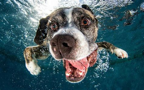I Heard Love Is Blind Seth Casteel Underwater Dogs Photography 15 Loveclicks Org