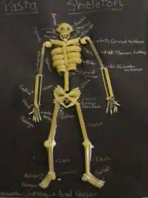 How To Make A Human Skeleton Out Of Paper - 158 best images about 3rd science skeletal system on