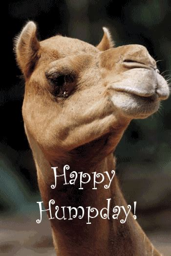 happy hump day pictures   images  facebook tumblr pinterest  twitter