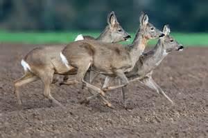 central illinois wildlife park plan draws support