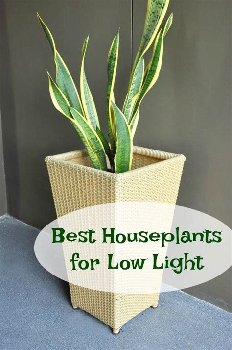 good plants for low light low lights houseplant and lights on pinterest