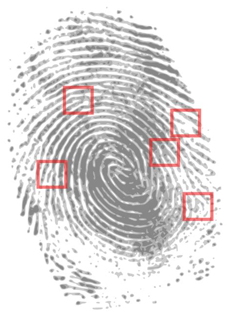 Illinois Fingerprint Background Check Fingerprinting Live Scan Service Illinois State Background Screening Live Scan