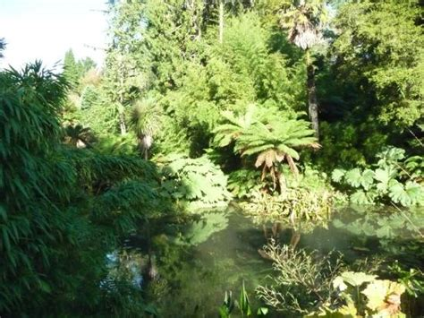 Jungle picture of the lost gardens of heligan st austell tripadvisor