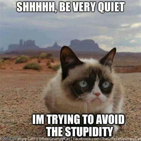 Grumpy Cat Friday Meme - me monday thru friday grumpy cat pinterest