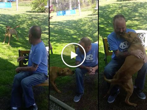 doesn t recognize owner after weeks in the hospital doesn t recognize owner until sniffs thechive