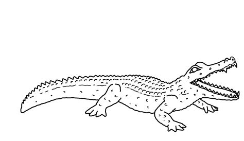 alligator coloring page free printable alligator coloring pages for animal
