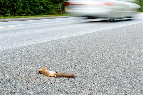 roadkill 3d mother 3d roadkill mom wallskid