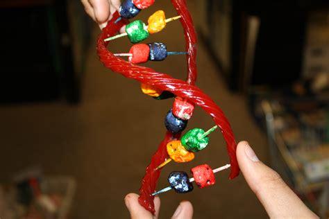 Helix Craft Dna Science Anatomy