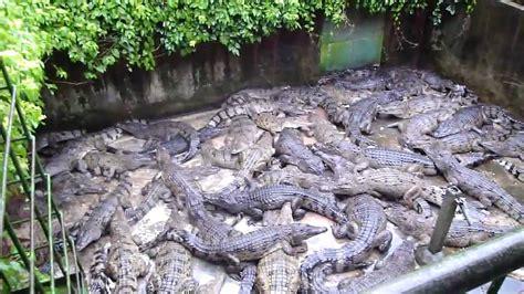 Crocodile Farm - YouTube