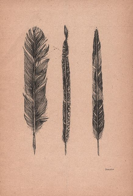 tattoo over pen 20 best feathers images on pinterest drawings feather