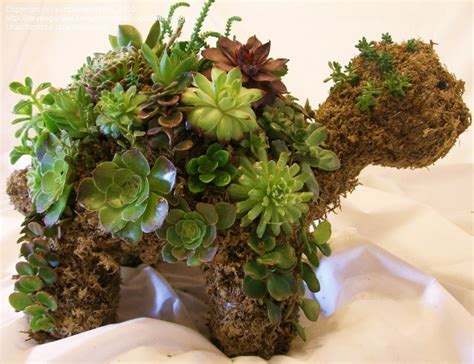 how to make a succulent turtle succulents and turtles on pinterest