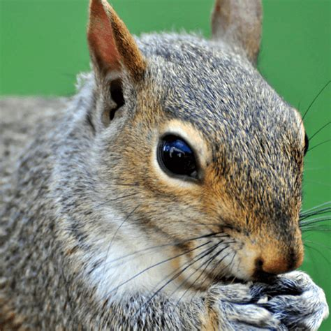 how to get rid of squirrels in the backyard how to get rid of squirrels how to get rid of stuff