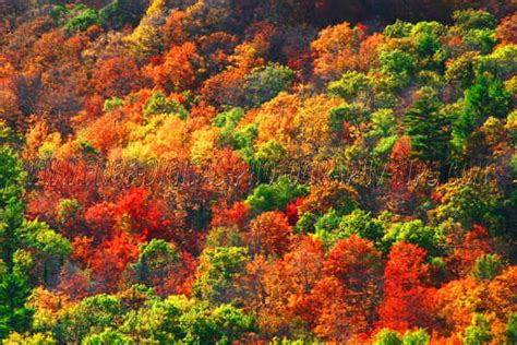 in color michigan fall color tours northern michigan up travel autos post