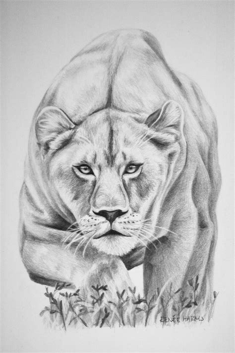 1000 images about lioness tattoos on lioness