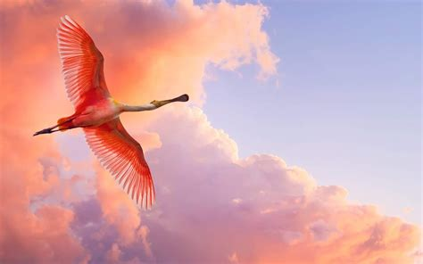 pink wallpaper with birds pink birds wallpapers entertainment only