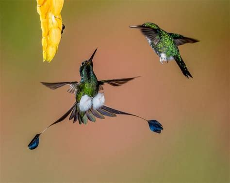 have you seen this hummingbird before the nature fan
