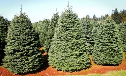 great west christmas trees in temecula ca groupon