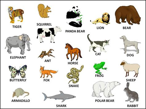 Where All The Animals by Hd Animal Pictures 2013