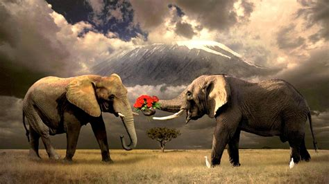 Elephants Images Backgrounds HD Wallpapers Free Download
