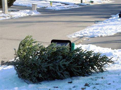 edmonton christmas tree pickup starts jan 12 edmonton