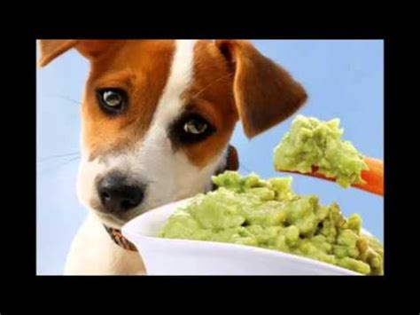 foods dogs should not eat foods dogs should not eat how to save money and do it yourself