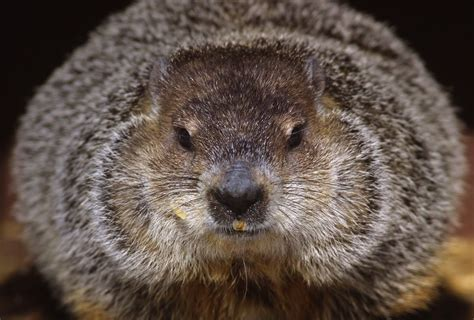 groundhog day how how groundhog day history involves the groundhog time