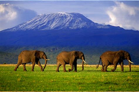 imagenes interesantes de africa amboseli national park diani travel center