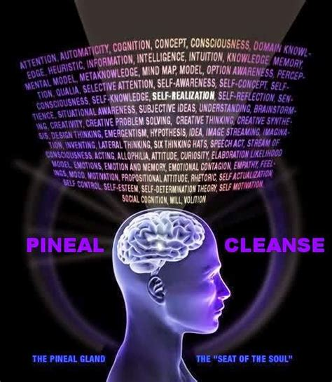 3rd Eye Opener Detox by Pineal Cleanse Decalcify The Pineal Gland