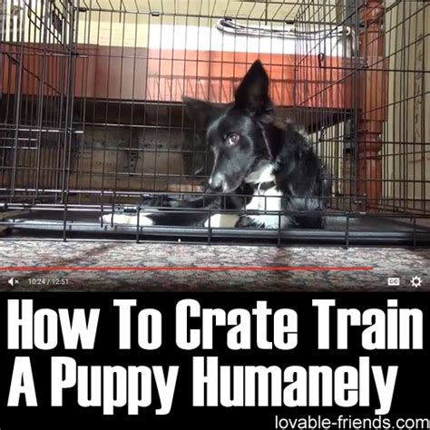 how to crate a puppy at how to crate a puppy humanely