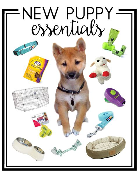 what to get for a new puppy new puppy essentials dwell beautiful