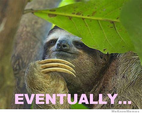 Sloth Meme Generator - baby sloth meme memes