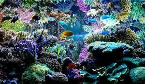Reef Aquarium Is Definitely One Of The Best Designed Aquarium We Ve