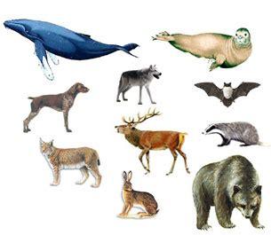 mammiferi volanti 301 moved permanently