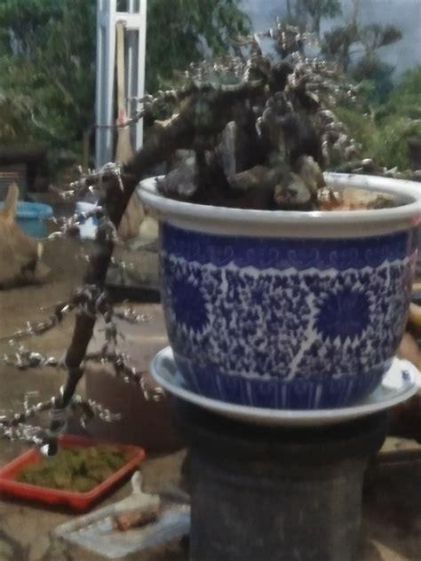 tips trick membuat bonsai air terjun cascade cantik