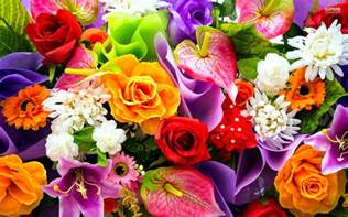 colorful flower 1443599416 colorful flowers wallpapers jpg places to