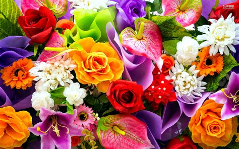 colorful flowers wallpapers hd images new colourful