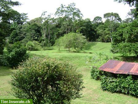liegenschaft kaufen costa rica top angebot urwald farm mit 202 ha an der