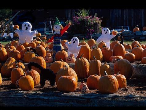 halloween pumpkin patches pumpkin patch fun at allen sarac professional karate centers
