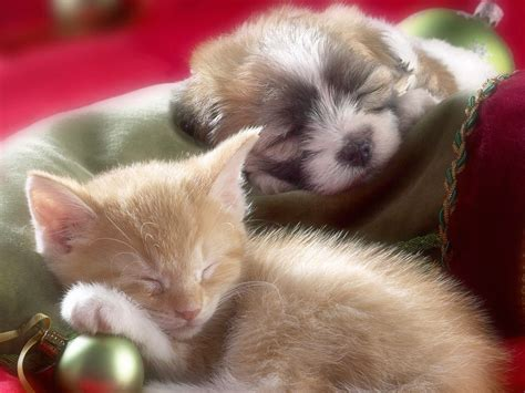 baby puppies and kittens baby kittens and puppies sleeping quotes