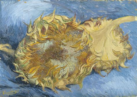 D Two file two sunflowers jpg wikimedia commons