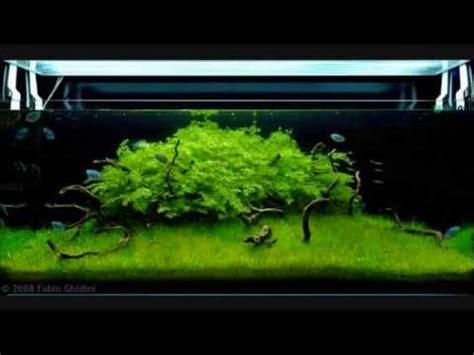 Aga Aquascaping Planted Tanks Aquarium Aquascaping Contest 2008 Youtube
