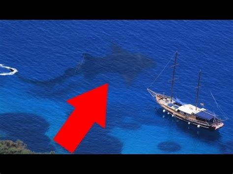 megalodon sharks still lives evidence that megalodon is not extinct megalodon shark still alive proof
