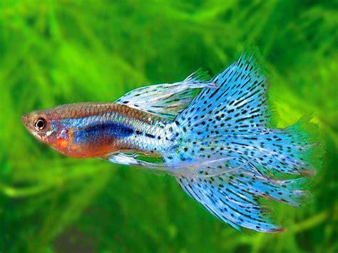 Pakan Udang Aquascape jenis ikan untuk aquascape air tawar belajar berkebun di