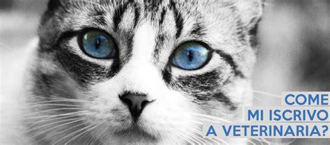 iscrizione test bocconi come si fa l iscrizione al corso di veterinaria 2019