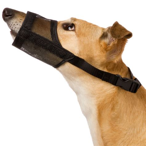muzzle petsmart grreat choice harness grreat get free image about wiring diagram